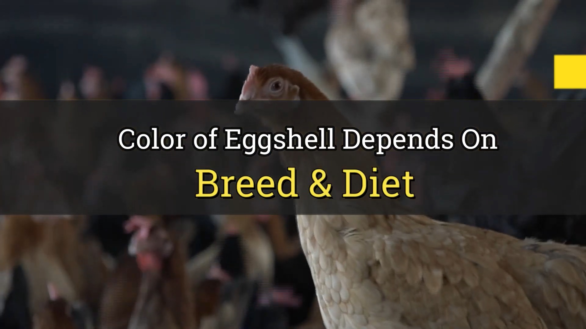 Identify Organic Egg & Non Organic Eggs with Shell Color